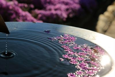 「ジュピアランドひらた」の芝桜1