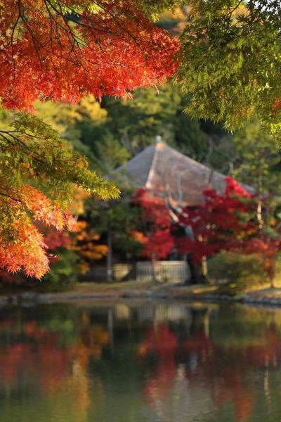 紅葉の白水阿弥陀堂1