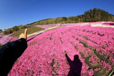 「ジュピアランドひらた」の芝桜3
