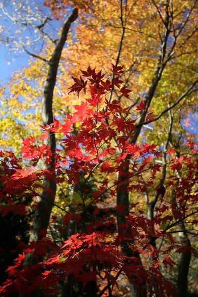 深まる秋1
