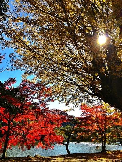 白水阿弥陀堂の秋4