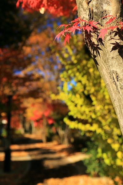 秋も終わりですね1