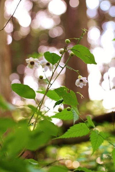 貝泊の稀少植物1