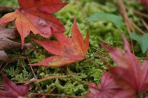 深まる秋2