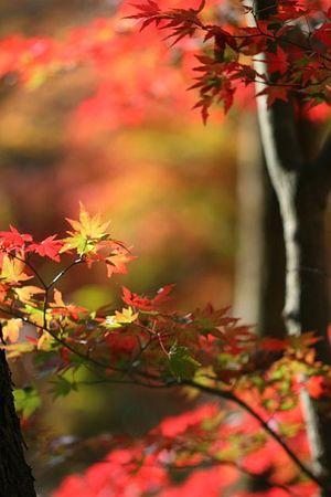紅葉の時季も終わりですね・・・