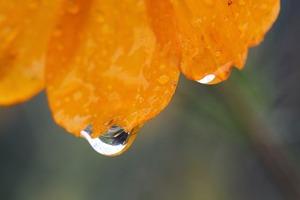 貝泊に咲く花1