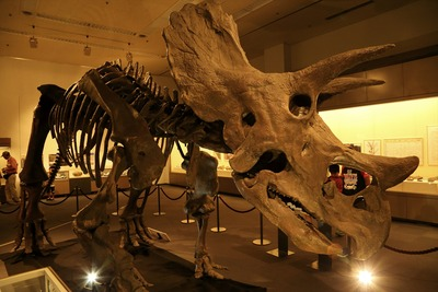 会津の県立博物館7