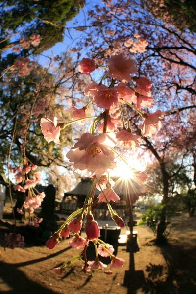 三島八幡神社1