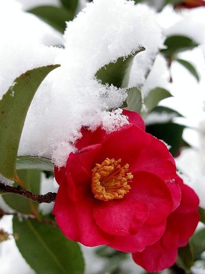 降雪に見舞われた酒井歯科医院2
