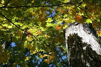 秋色のイメージってこんな感じでしょうか、チョイと早いかな・・・?