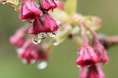 雨の下と書いて「雫(しずく)」(笑)
