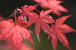 深まる秋3