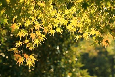 県立いわき公園内の紅葉3
