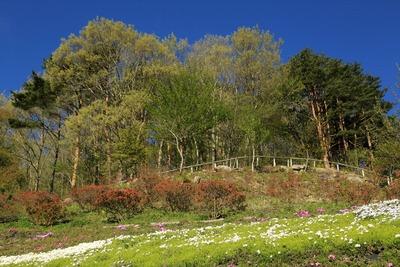 「ジュピアランドひらた」の芝桜4