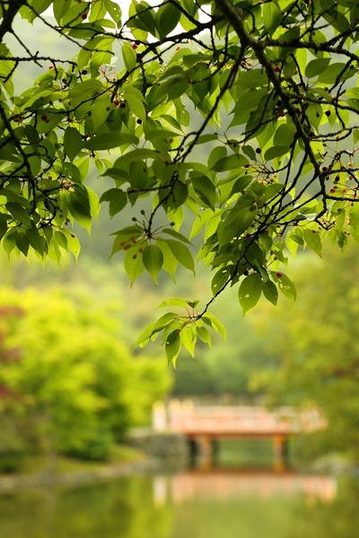 新緑の白水阿弥陀堂2