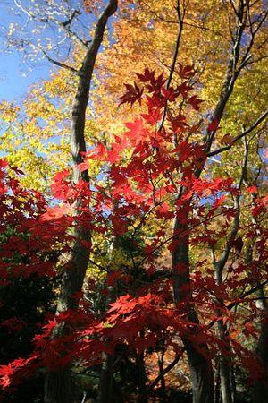 紅葉もそろそろ終わりを迎える・・・