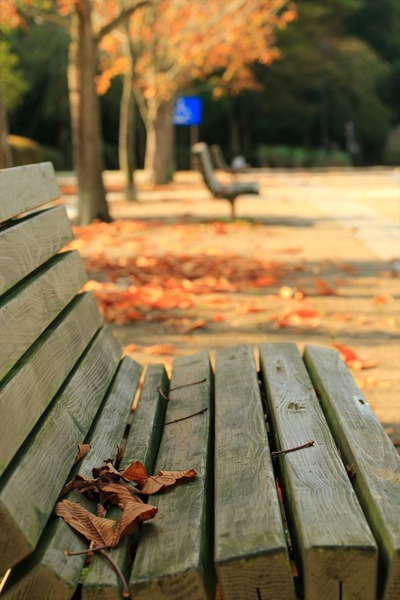 県立いわき公園内の紅葉5