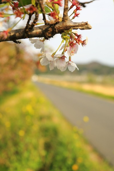 夏井川沿い1