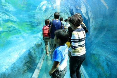 感心した旭山動物園3