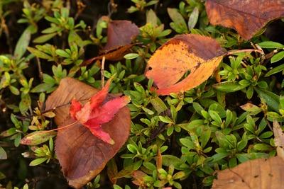県立いわき公園内の紅葉2