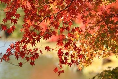 紅葉の白水阿弥陀堂2