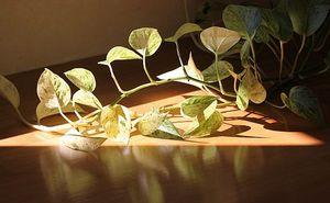 院内の観葉植物に注ぐ朝日