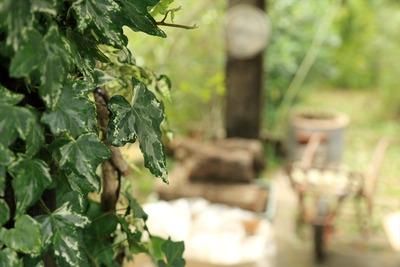 大和田自然農園さんで昼食7