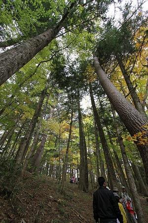 戸渡・森の散策3