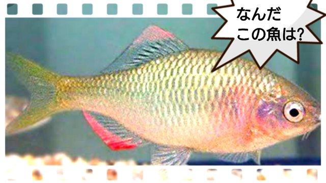 誰もついてこない釣りにハマってしまった・・