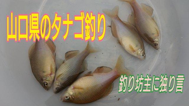 19-10-01-04-26-39-273_deco