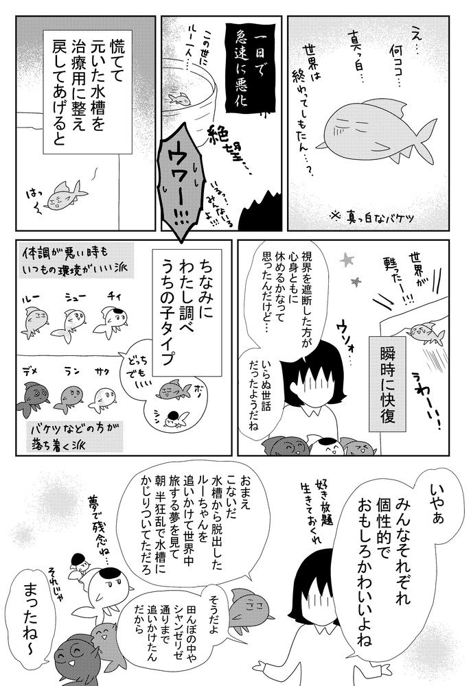B金魚1005.w