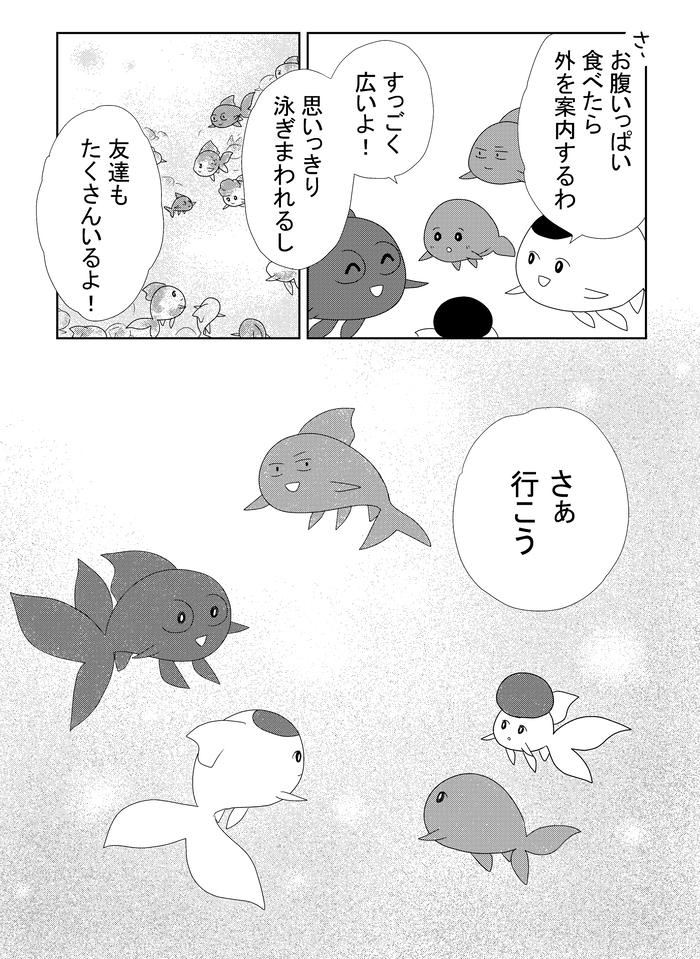 B金魚773.w