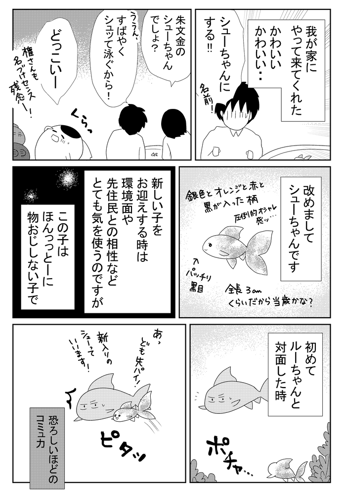 B金魚868.w