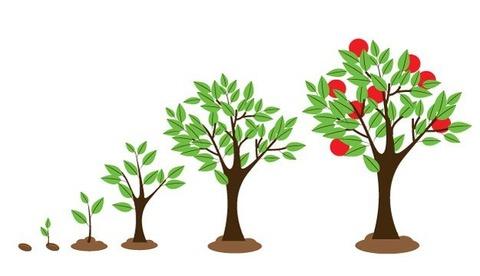 芽から大木