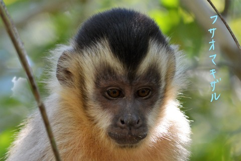 ブラジル 動物 パンタナール (7)