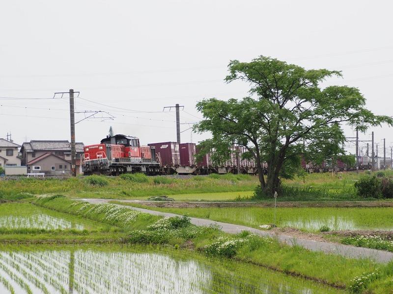 8 DD51-1801 コンテナ列車 白鳥信号所にて その0