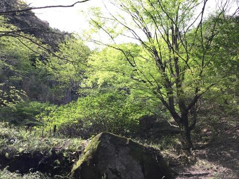 写真 2016-04-10 14 41 14