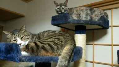 猫20160531_003610