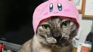 カービィかぶり猫