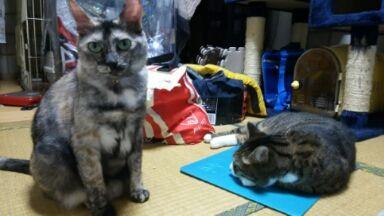 猫20160929_011656