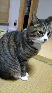 猫20160330