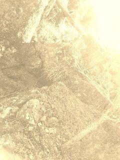 190309_1125~02 - コピー (2)