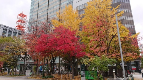 R1-11-8 大通公園 3