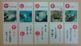 お魚カルタ2