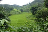 北タイの里山