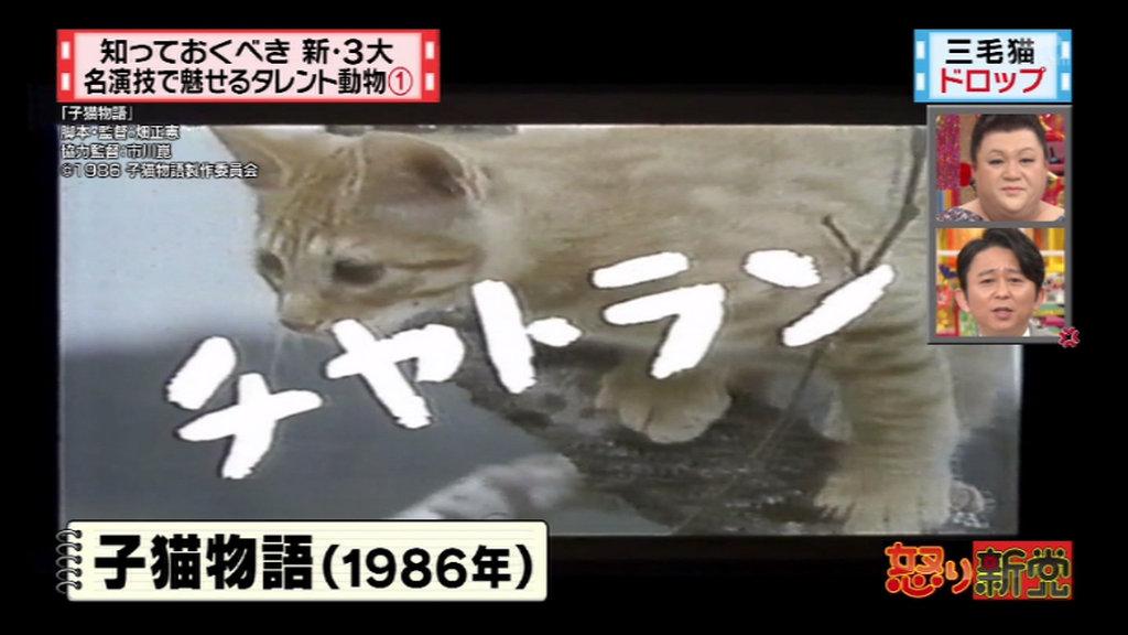 怒り新党 3月15日放送~新3大・名演技で魅せるタレント動物 ...