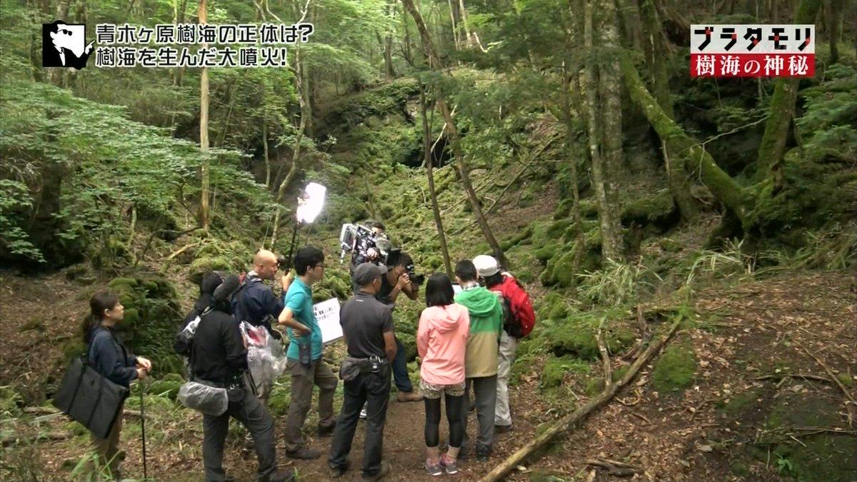 富士 の 樹海 なん j
