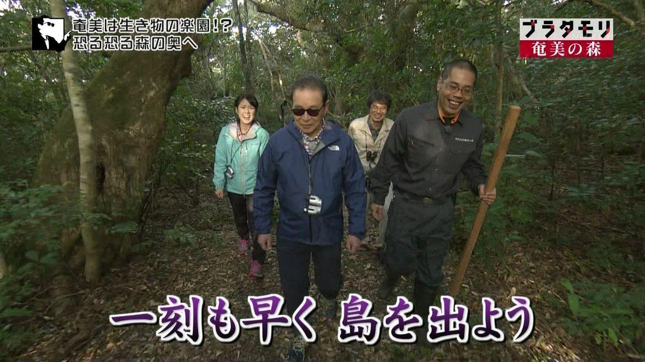 ブラタモリ 3月25日放送~奄美の...