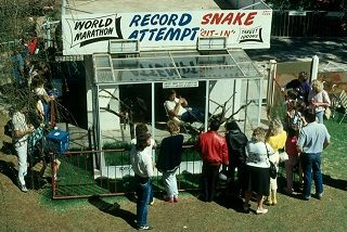 Austin World Record Snake _sit-in__ 107 days and nights in c
