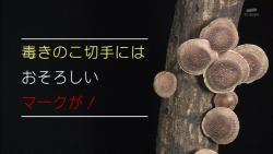 kinoko22